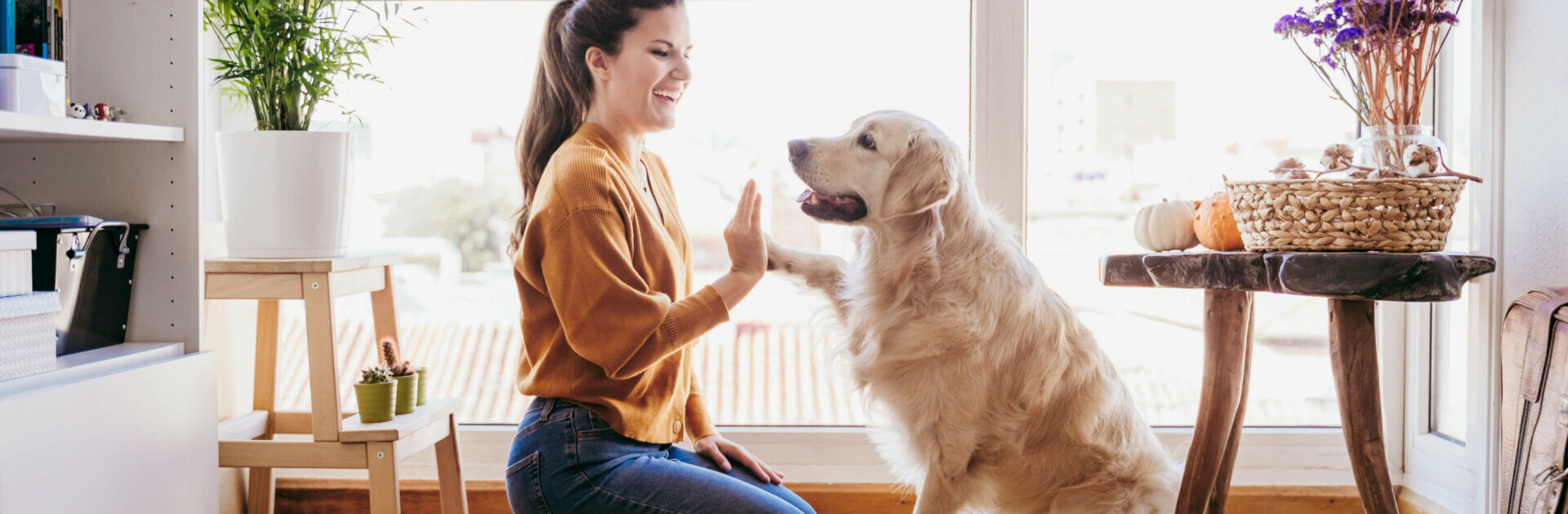 Woman playing high five with her golden retriever